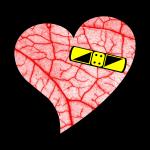 vascularheart
